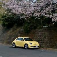 桜・ザビートルが綺麗ですね!