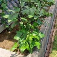 高効率的な使い方の家庭菜園