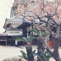 【昔の写真から 12】 高知城にて(1985年3月卒業旅行7 )