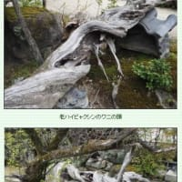 ■【カシャリ! ひとり旅】43京都府 勧修寺15 書院 3