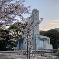 「嘉代子桜・親子桜」(北九州市小倉北区)