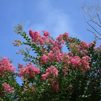 秋の山草と斑入り植物展は今日から♪