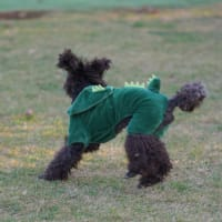 Nobu-kun the blind dog / 盲目の犬 ノブ君