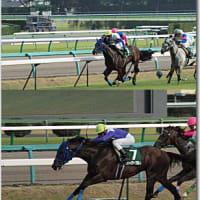 中山競馬場にて with Olympus E-620/2010秋競馬開幕