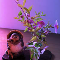 ●我が家の10月の花(7) コムラサキ、秋明菊を生け花に  ILCE-7S   PowerShotG3Xのクリエイティブショットなど