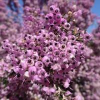 「春の花たち」/新宿御苑2020