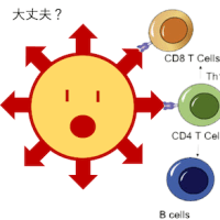 【mRNAワクチン】 トゲトゲのマクロファージは善玉?悪玉?