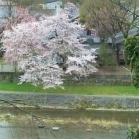 ■中村洋子アナリーゼ講座≪平均律1巻と、この「1巻を源泉」とする名曲」≫第2回■