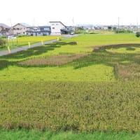 JR関西本線は特急「ワイドビュー南紀4号」 桑名-長島 (オマケは地元の田んぼアート)