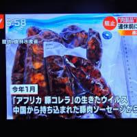 4/24 タケロー 中国の豚肉の価格 アフリカ豚コレラ 税関検