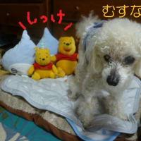 湿気があって暑いんだか…涼しいんだか…老犬ラスさんも悩む…(-_-)ウーム