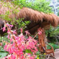 熱帯・乾燥地帯の花 ~咲くやこの花館 ①