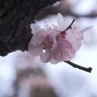 ★春の花 数種類 2020