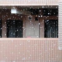 降雪(2020/3/29)
