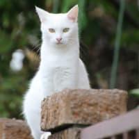 続・白猫王国