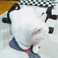 4月17日(水)のつぶやき 昨日から #筋トレ 再開 で…なぜ?どかないww 白猫ミルコ 15時に遅い昼食パン&コーンスープ