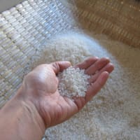 初めての 脱穀!籾摺り!