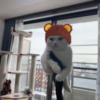 杏の得意技