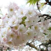 春は来たりつつある