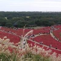 真っ赤!コキアの丘.。:・・.。:*・★