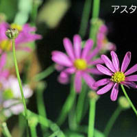 10/26  「10月の花便り」