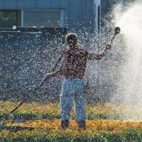 ビオラの肥料試験 & 夏のペチュニア & Ku-pi-chan