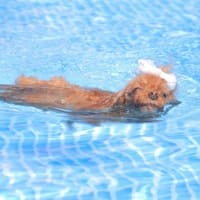 Pardoの泳ぎ☆