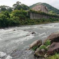 狩野川引き水遅く、早くて日曜日かな?