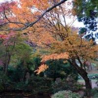 奥出雲 桜井家住宅の紅葉
