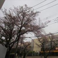 4/5 日曜のクリーンアップ・デー あざみ野東急まで買い物に 大学の「今」