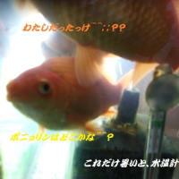 金魚水槽の水温にも注意・・・・