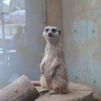 札幌まちなか探検隊 令和初の円山動物園  行ってきました!!