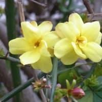 4月の花:2006~まとめ