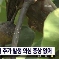 韓国の忠清南道の梨農園で、果物の伝染病「火傷病」確認。