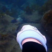 6月12日(土)体験ダイビング&FUNツアーで大田に行ってきました!!海は凪!体験ダイビング日和!ドライスーツでぬくぬくです!!