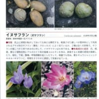 「毒毒植物図鑑」という植物図鑑を図書館で借りました。 ~ 千葉市図書館