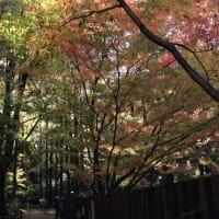 里山にオゾンが一杯の森林の紅葉 その1