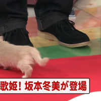すぽると!本田朋子【46】