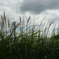 明日13日 中秋の名月…14日が満月 ( ゜∀゜)ノ ○  そして気になる台風のたまご