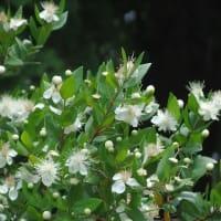 半田山植物園の花 ①