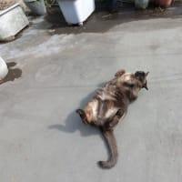 ネコは本当は砂浴びが好き!