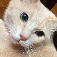 正統派『猫との暮らし』ブログ。