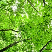 緑あふれる