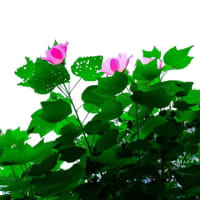 Flowers20210930