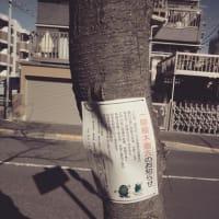 桜並木の伐採
