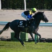 競馬 アルゼンチン共和国杯&みやこS予想(2019)