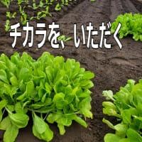発根を促す、葉面散布