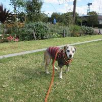 お散歩は、犬が楽しくなければ