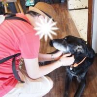 LOLAに会いにカイムキのTHE PUBLIC PETへ