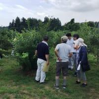 大島特産果樹研究会の視察研修が行われました